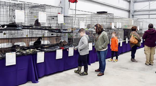 John P. Cleary   The Herald Bulletin<br /> Animal Protection League held a Meow-A-Thon Saturday at Harrah's Hoosier Park Racing and Casino were felines were available for adoption at the price of a freewill donation.