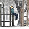 Scott Wareham, of Daleville, has a snowy workout Wednesday morning as he walks around Mounds State Park. Wareham, a former jogger, now gets his exercise walking through the park but makes his way past the playground where he takes a break and does several reps of chin-ups before resuming his walk.