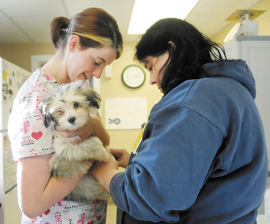 Lauren Caldwell holds Gizmo, a 10 week old Havanese puppy, as Colleen Miller clips his nails during the Madison County Humane Society's monthly clinic. The Humane Society holds the clinic on the third Saturday of every month and offers micro chipping, nail trimming and heart worm testing.