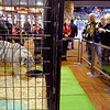 People look at, and take photographs of, this large tiger that greeted them at the main entrance to the Casino during Hoosier Park's Las Vegas LIVE The Big Show New Year's Eve party.