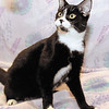 Pet of the Week from the APL.  This week we have Jewels, a 8 month old female domestic cat that has been spayed and is very playful.