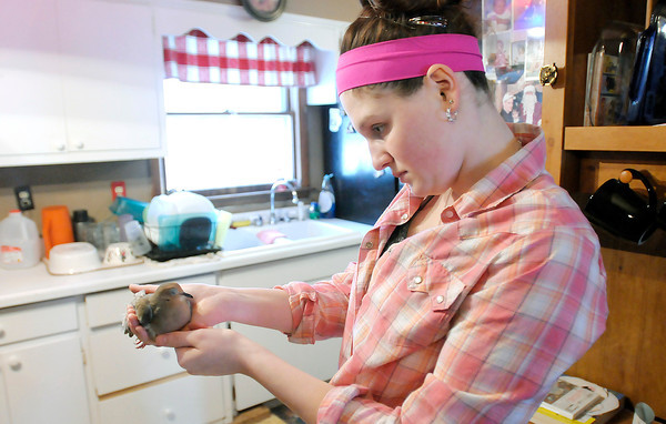 Don Knight / The Herald Bulletin<br /> Logan Miller, 14, holds a mourning dove she rescued. The bird was frozen to the ground.