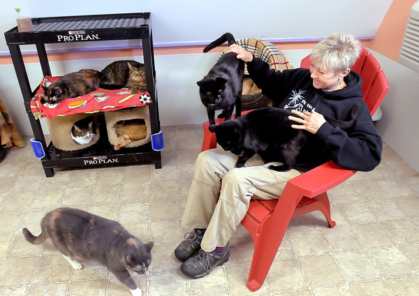 Don Knight / The Herald Bulletin<br /> Maleah Stringer visits with the cats in the no-kill cat sanctuary at the Animal Protection League. Stringer is executive director of the Animal Protection League.
