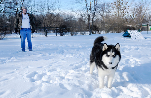 Don Knight / The Herald Bulletin<br /> Mark Johns brought his Siberian Husky Bandit to Anderson's dog park for some exercise and play on Friday.