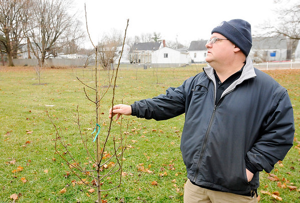 Don Knight | The Herald Bulletin<br /> Greg Spencer looks at a pear tree that has been planted in a city orchard. In a few years fruit from the trees will be available to residents.