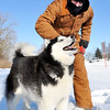 John P. Cleary |  The Herald Bulletin<br /> Mark Johns layers up to protect himself from the cold as he takes his Husky dog Bandit out for a walk around Shadyside Park Tuesday. The sub-zero temperatures didn't bother Bandit as he was in his natural element enjoying the winter weather.