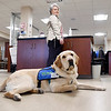 John P. Cleary | The Herald Bulletin<br /> Community Hospital's new therapy dog, Rainier, rests as he waits for the next physical therapy patient to come to the department as his trainer Cheryl Bennett, manager of inpatient rehabilitation services, watches him.