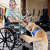 John P. Cleary | The Herald Bulletin<br /> Community Hospital's new therapy dog, Rainier, greets patient Jim Luurtsema before his therapy session.