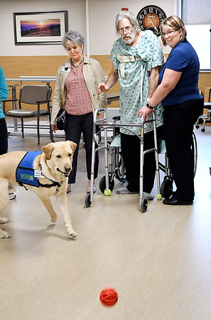 John P. Cleary | The Herald Bulletin<br /> Community Hospital's new therapy dog, Rainier, goes after the ball that patient Jim Luurtsema, center, tossed as part of his physical therapy while Cheryl Bennett, left, manager of inpatient rehabilitation services, and Melissa Long, right, PTA help support Jim while his standing.