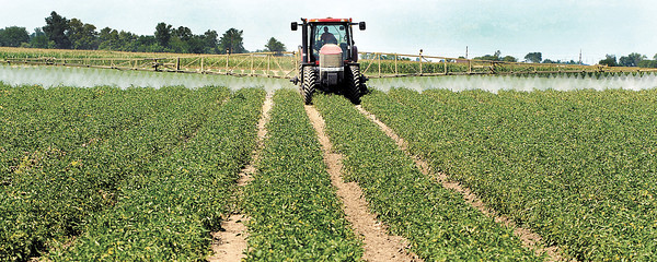 This farmer has a wide reach across his tomato field as he sprays fungicide over the plants along CR 1100 North.  Even though the extreme dry weather has slowed down the growth of fungus this farmer says he still sprays for it every 7 to 10 days on his fields.