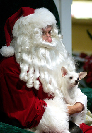 THB photo/Don Knight   12/6/07    Stand Alone<br /> Karen Talmage brought her 11-month-old Chihuahua Eli to Mounds Mall Thursday to have his photo taken with Santa. There will be a second pet night on December 20th from 6 - 8 p.m. Proceeds from the pet nights benefit the Madison County Humane Society.