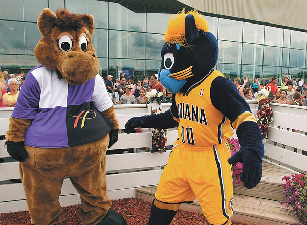 Hoosier Buddy and Boomer have fun with each other and the crowd at Hoosier Park Saturday evening.  Boomer was there to participate in the celebrity races on the last night of live standardbred racing.
