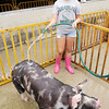 Don Knight/The Herald Bulletin<br /> Maggie Bova, 13, washes her pig as animals were checked in at the 4-H Fairgrounds in Alexandria on Saturday. The Fair kicks off Sunday with a parade through downtown Alexandria at 2 p.m. and the Queen pageant at 7:30 p.m. on the Kiwanis stage.