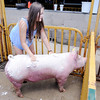 Don Knight | The Herald Bulletin<br /> Sydney Wagner, 15, washes her pig at the swine barn at the fair grounds on Saturday. The Madison County 4-H Fair opens today.