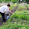 John P. Cleary | The Herald Bulletin<br /> Park Place Community Center has a kids gardening club. Temple O'Brien, 6, identifies the plant to Mary Kathryn Brewer who is the Community Center's garden coordinator as the kids walk through the garden  Thursday.