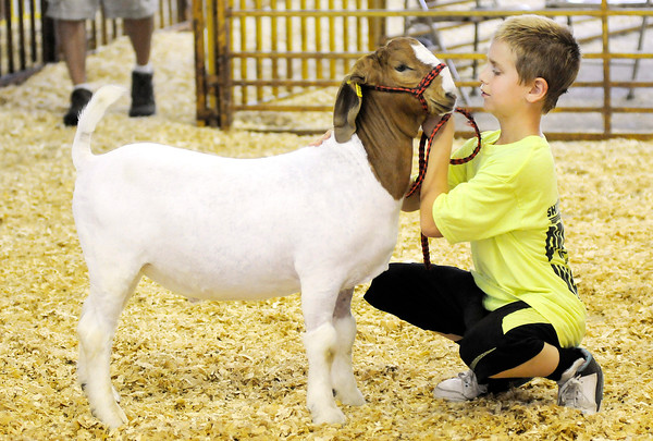 Don Knight | The Herald Bulletin<br /> Dalton Gibson presents his goat in the show arena during the 4-H Auction on Thursday. Gibson's goat fetched a high bid of $1,200.