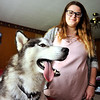 John P. Cleary |  The Herald Bulletin<br /> Siberian husky Lobo gets petted by Myranda Beach after being missing for 11 days after a kayaking accident on White River.