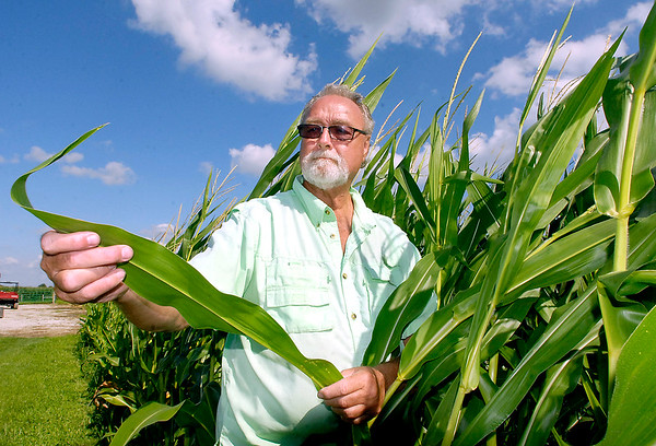 John P. Cleary |  The Herald Bulletin<br /> Rick Jarrett checks his corn crop for signs of damage from insects and moisture on his farm north of Elwood Friday afternoon.