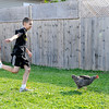 "Don Knight | The Herald Bulletin<br /> Jeremiah Berres chases a chicken during vacation Bible school ""Down on the Farm"" at First Missionary Baptist Church in Elwood."