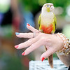Don Knight | The Herald Bulletin<br /> Ann Stevenson brought her Conure parrot to the People & Pets Extravaganza at New Horizon United Methodist Church on Saturday.