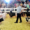 John P. Cleary | The Herald Bulletin<br /> Swine judge Kevin Ellis looks over the champion Gilts as he makes his decision of choosing a grand champion out of the group.