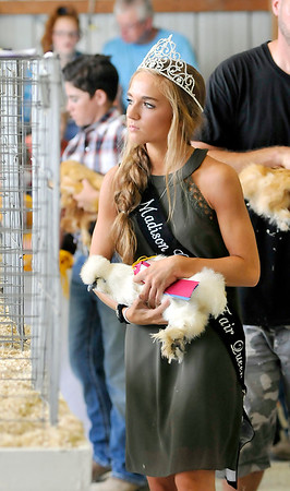 John P. Cleary   The Herald Bulletin<br /> 4-H poultry and swine shows.