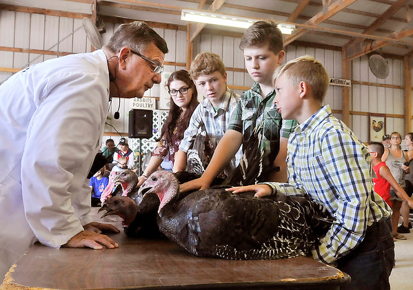 John P. Cleary   The Herald Bulletin<br /> 4-H Poultry Show judge Ronn Paterson, left, leans in to hear Syler Hartwell, 11, right, as he asks him questions during judging of the commercial turkey class at the Madison County 4-H Fair Monday.