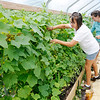 Don Knight | The Herald Bulletin<br /> From left, Laura Smith and her daughter Kayleigh Richards check their cucumbers at Asparagus Annie's on Wednesday.