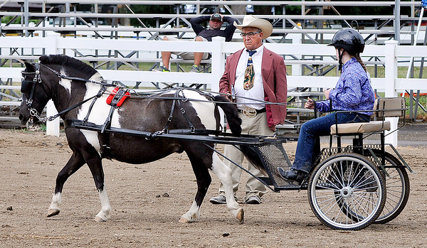 John P. Cleary | The Herald Bulletin<br /> Brianna Lane drives her cart past judge Jack Brush during judging of the  Pleasure Driving class-56 inches and under at the 4-H Horse & Pony Show Friday.