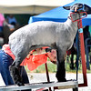 John P. Cleary | The Herald Bulletin<br /> Wednesday at the Madison County 4-H Fair.