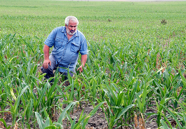 John P. Cleary | The Herald Bulletin<br /> Bob Blake checks how his corn is progressing on the family farm near Alexandria. The original 80 acres of farmland has been honored by the state as a Hoosier Homestead Farm.