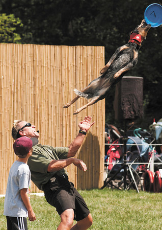 """Chewy the dog leaps off the chest of performer Lou Mack and grabs a flying disk as an audience member looks on during the JUMP! The Ultimate Dog Show at the Indianapolis Zoo on Thursday. Shows will be held daily in DeanÕs Arena through the summer. Check  <a href=""""http://www.indyzoo.com"""">http://www.indyzoo.com</a> for show times."""
