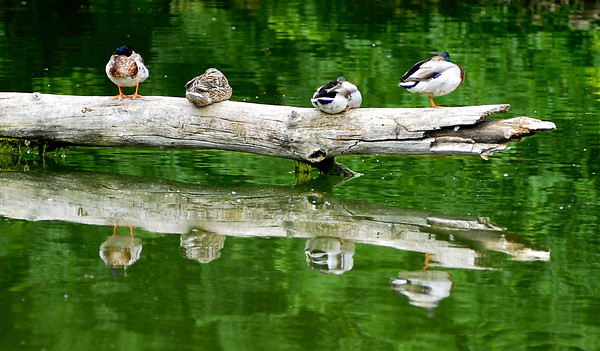 Reflections in the water at Shadyside Lake.