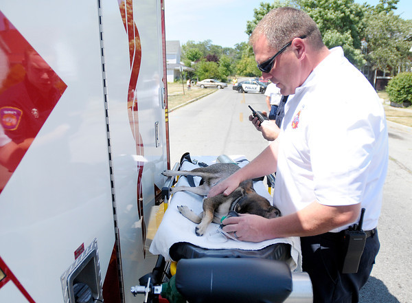 AFD Chief Investigator Kevin Heflin gives oxygen to a dog who was rescued from a house fire at 428 Milton Ave. in Anderson on Wednesday. The dog appeared to recover and was taken to VCA North Wood Animal Hospital for further treatment.