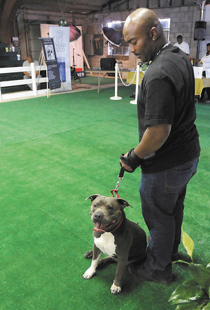 Damon Nunn and his dog King compete in the light heavy weight class during Canine Body Building competition at the fair grounds in Alexandria on Saturday.