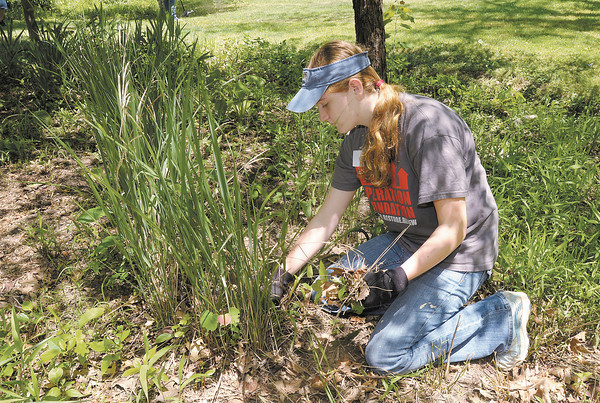 Olivia Hurd pulls weeds as church youth groups volunteer to clean up Shadyside Park on Thursday as part of Project 765.
