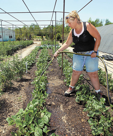 Janine Jender waters the plants at Affordable Trees that are being grown for Jazzis Market in Chesterfield.