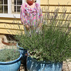 Donna Farran spends a great deal of time tending her flowers, including this lavender plant.