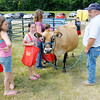 Don Knight/The Herald Bulletin<br /> Brian Messersmith holds onto Rita, a Jersey Dairy cow, as she is petted by visitors to Prairie Farms' 75th Anniversary celebration at Athletic Park on Saturday.