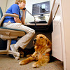 Darra, Joni Breedman's 20-month-old golden retriever seeing eye dog, rests under Joni's desk as she works in St. Vincent Anderson Regional Hospital's Erskine Rehabilitation Center.