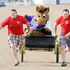 Don Knight | The Herald Bulletin<br /> Brothers and Elwood firefighters Cory, left, and Matt Boyland pull Hoosier Park mascot Hoosier Buddy in a sulky race during the Guns and Hoses event at Hoosier Park on Saturday. To view or buy this photo and other Herald Bulletin photos, visit photos.heraldbulletin.com.