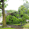 Don Knight | The Herald Bulletin<br /> Neighbors said a lightning strike split this tree sending half the tree into a home at 15th and Pearl Thursday.