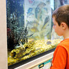 Don Knight | The Herald Bulletin<br /> Elijah Underwood, 6, looks at a crayfish in an aquarium at Mounds State Park Nature Center during Critter Feeding Time on Thursday. To view or buy this photo and other Herald Bulletin photos, visit photos.heraldbulletin.com.