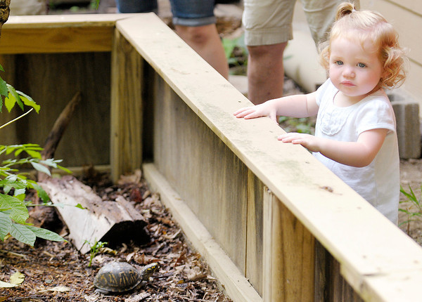 Don Knight   The Herald Bulletin<br /> Emily Underwood, 19 months, looks into an enclosure that holds box turtles during Critter Feeding Time at Mounds State Park on Thursday. Visitors to the park can watch the nature center animals being fed each Thursday at 11 a.m.