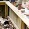 Don Knight | The Herald Bulletin<br /> Emily Underwood, 19 months, looks into an enclosure that holds box turtles during Critter Feeding Time at Mounds State Park on Thursday. Visitors to the park can watch the nature center animals being fed each Thursday at 11 a.m.
