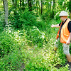 Don Knight | The Herald Bulletin<br /> Greg Spencer points to a paw paw tree growing an an area that has been cleared of invasive Asian bush honeysuckle.