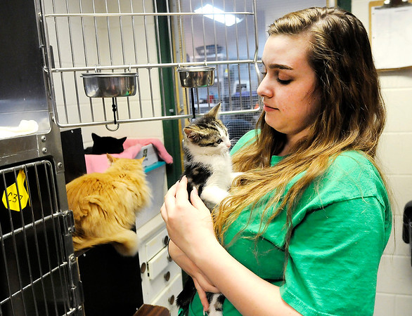 Don Knight   The Herald Bulletin<br /> Emma McKinney holds a kitten at The Animal Protection League in Anderson. The shelter has seen a larger than usual influx of kittens this year.