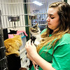 Don Knight | The Herald Bulletin<br /> Emma McKinney holds a kitten at The Animal Protection League in Anderson. The shelter has seen a larger than usual influx of kittens this year.