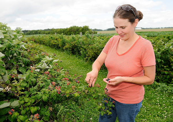 Don Knight   The Herald Bulletin<br /> Katie Guenthenspberger picks raspberries at Guenthenspberger Farms in Daleville. The farm is open 8:30 a.m. to noon Tuesday through Friday, 8:30 a.m. to 4 p.m. Saturday and 1 to 4 p.m. Sunday.