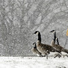 John P. Cleary | The Herald Bulletin<br /> Heavy snow squalls blew through the area Tuesday morning lowering visibility and covering grassy areas with a dusting of the white stuff.